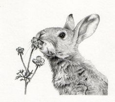 Drawn bunny pencil In drawing Search for Gillian