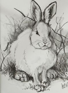 Drawn rabbit pencil A things DrawingRabbit are Cow