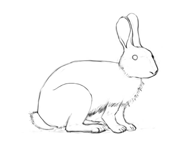 Drawn bunny pencil A shapes to a How
