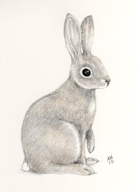 Drawn rabbit pencil Original Rabbit Wild pencil