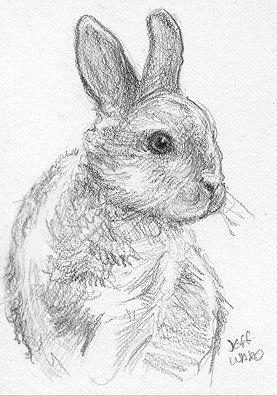 Drawn bunny pencil 675 images Pinterest cute sketch