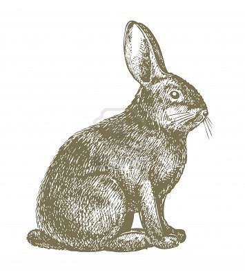 Drawn rabbit profile On lovely Lappin expression profile