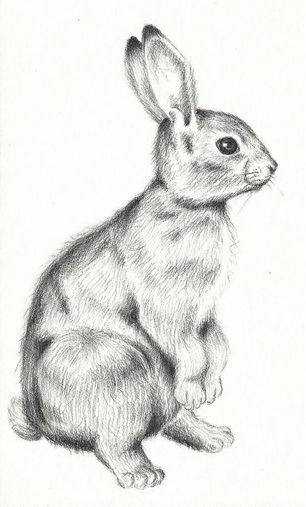 Drawn rabbit profile Sketch Go For > Standing