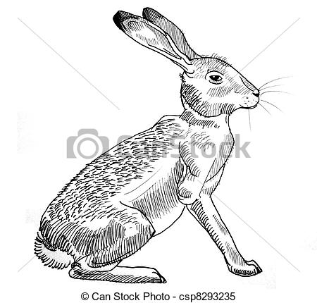 Drawn rabbid profile 52 of Rabbits Illustrations drawing