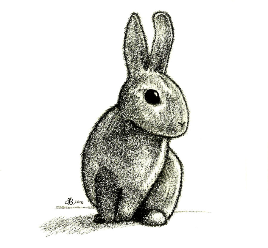 Drawn rabbit rabbit eye Aquarius by DeviantArt Drawing Rabbit