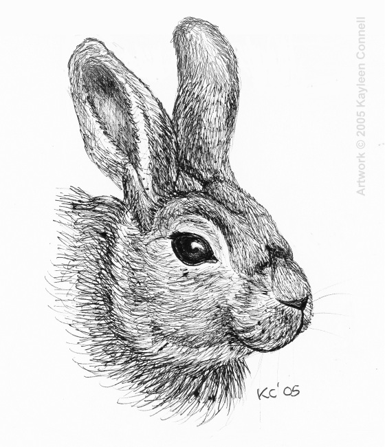 Drawn rabbit rabbit eye Paint current bunny down bunny