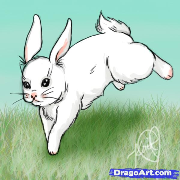 Drawn rabbit rabbit eye Animals Step Rabbits Animals
