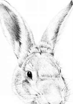 Drawn rabbit realistic Arts Drawing Drawing RABBIT Pencil
