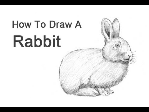 Drawn rabbid realistic Rabbit to YouTube How How