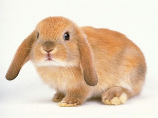 Drawn rabbit realistic Jpg Bunny Draw rabbit A