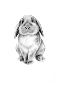 Drawn rabbit realistic Bunny Google Art Art Eared