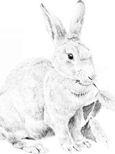 Drawn rabbit realistic Pencil Rabbit Arts a Rabbit