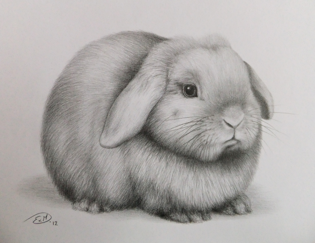 Drawn rabbid realistic And Rabbit Rabbit Pinterest ideas
