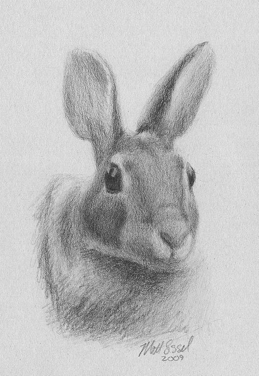 Drawn rabbit realistic Jpg by of Sissel rabbit