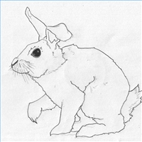 Drawn rabbit realistic : How Draw to with