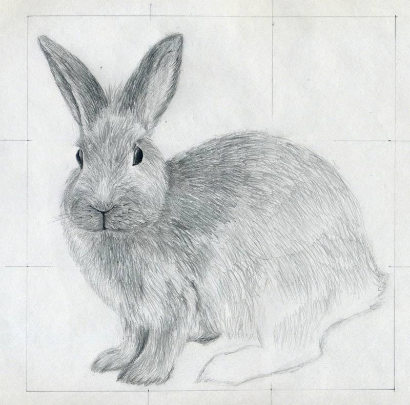 Drawn bunny pencil To Draw Rabbit click image