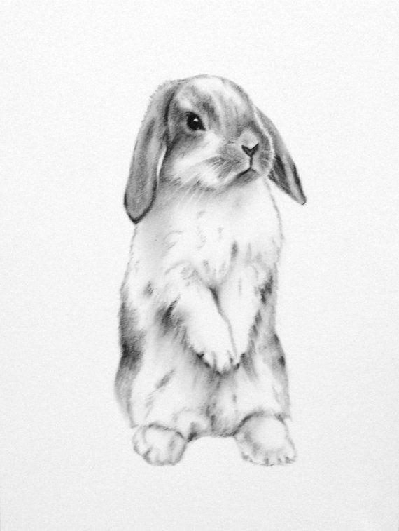 Drawn rabbid profile Sketch Rabbit Art Best on