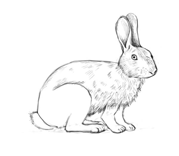 Drawn rabbit simple Factory rabbit How rabbit to