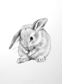 Drawn rabbit sketch Mes draw to realistic pictures