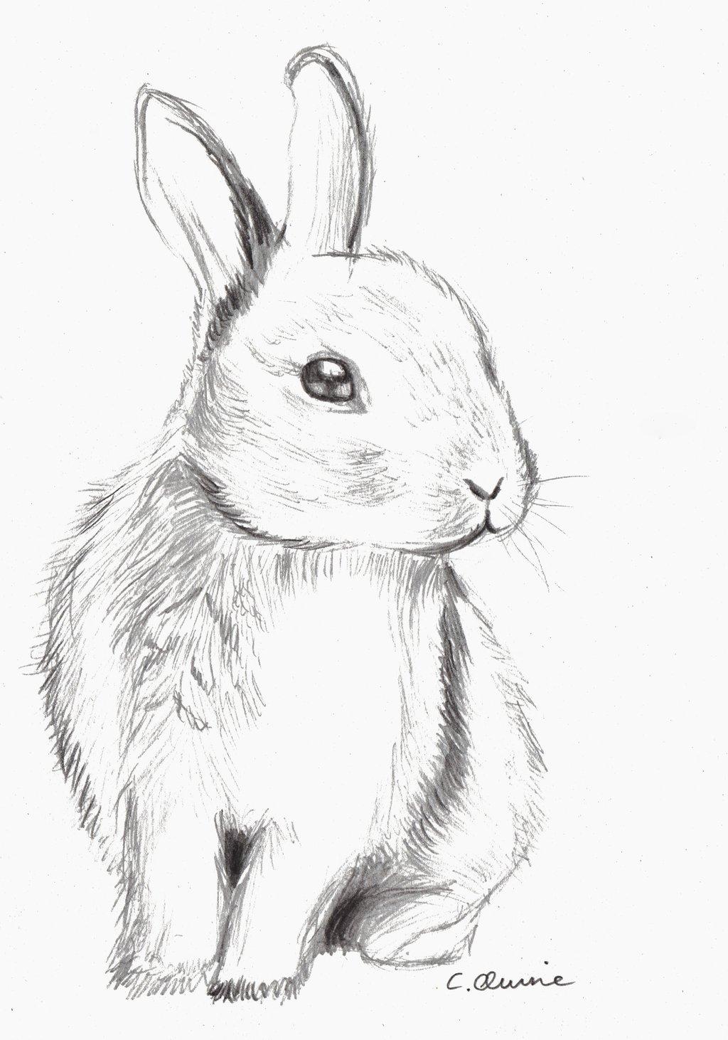 Drawn rabbit sketch 0o een  by ze