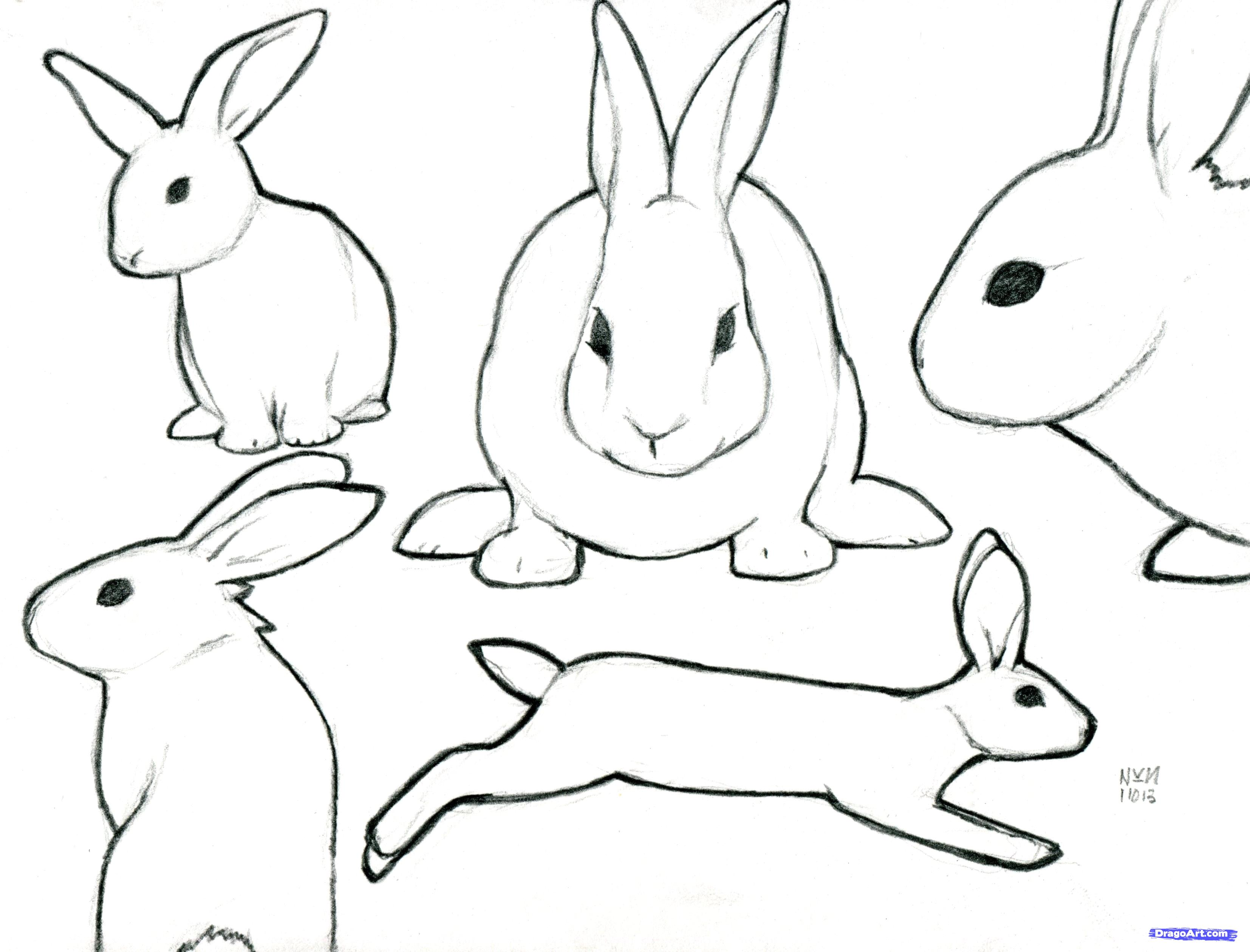 Drawn rabbit sketch Sketch Rabbit Rabbit photo#11 Sketch