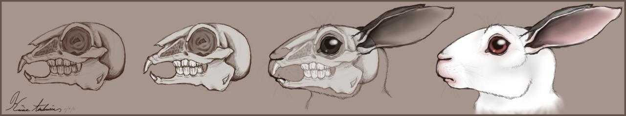 Drawn rabbit skull Photo#5 illustration Illustration Skull Rabbit