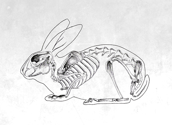 Drawn rabbit skull Behance on Kelinci Tulang and