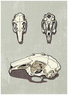 Drawn rabbit skull Skeleton  rabbit to love