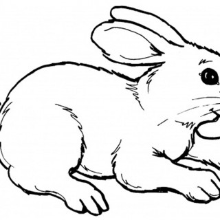 Drawn rabbit small Drawn Drawing Bunny Bunnies And