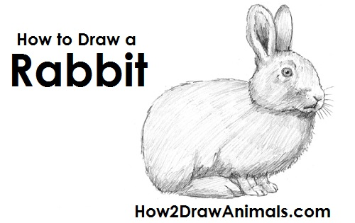 Drawn rabbit step by step Your PAUSE Please Draw
