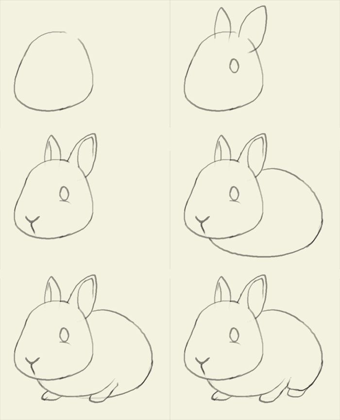 Drawn rabbit step by step Drawer for to how to