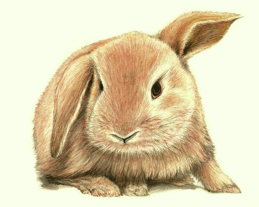 Drawn rabbit sweet bunny Bunny Bunny Heidi Kriel Sweet