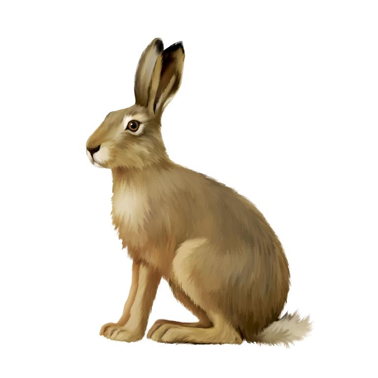 Drawn rabbit wild rabbit Wild Download Vector Graphic Wild