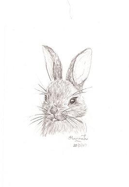 Drawn rabbit wild rabbit Rabbit Pretty Design wild Art