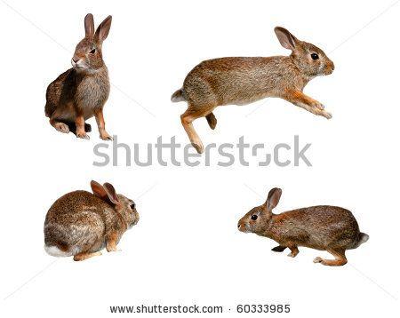 Drawn rabbit wild rabbit Rabbit best images collage on