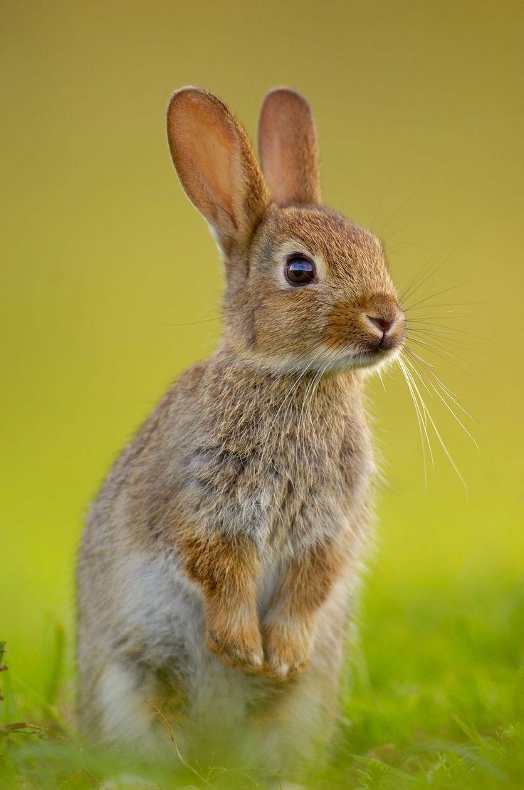 Drawn rabbit wild rabbit Childhood of on rabbits Best