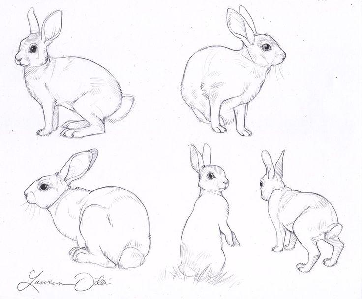 Drawn rabbit wild rabbit Wild Pinterest baby Study rabbits