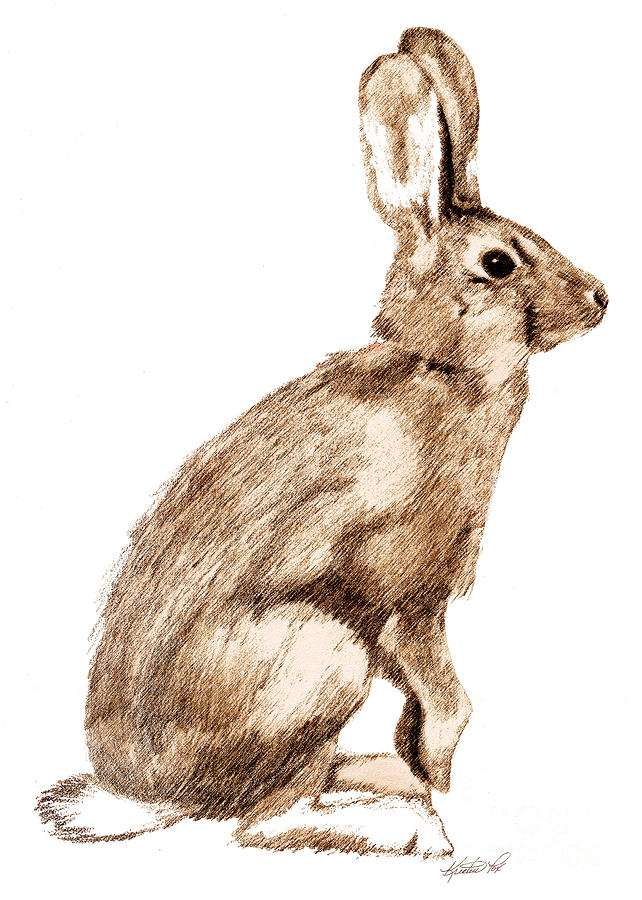 Drawn rabbit wild rabbit Fox Curious Rabbit Kristen Curious