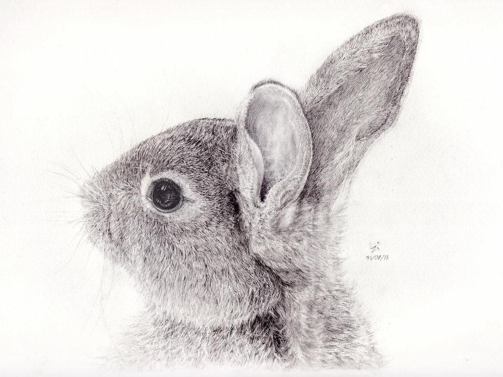 Drawn rabbit wild rabbit By on 7iiZj DeviantArt Rabbit