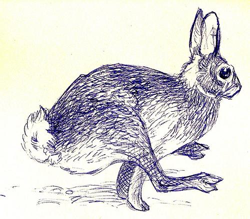 Drawn rabbit wild rabbit Hare Pinterest hare Illustration pen
