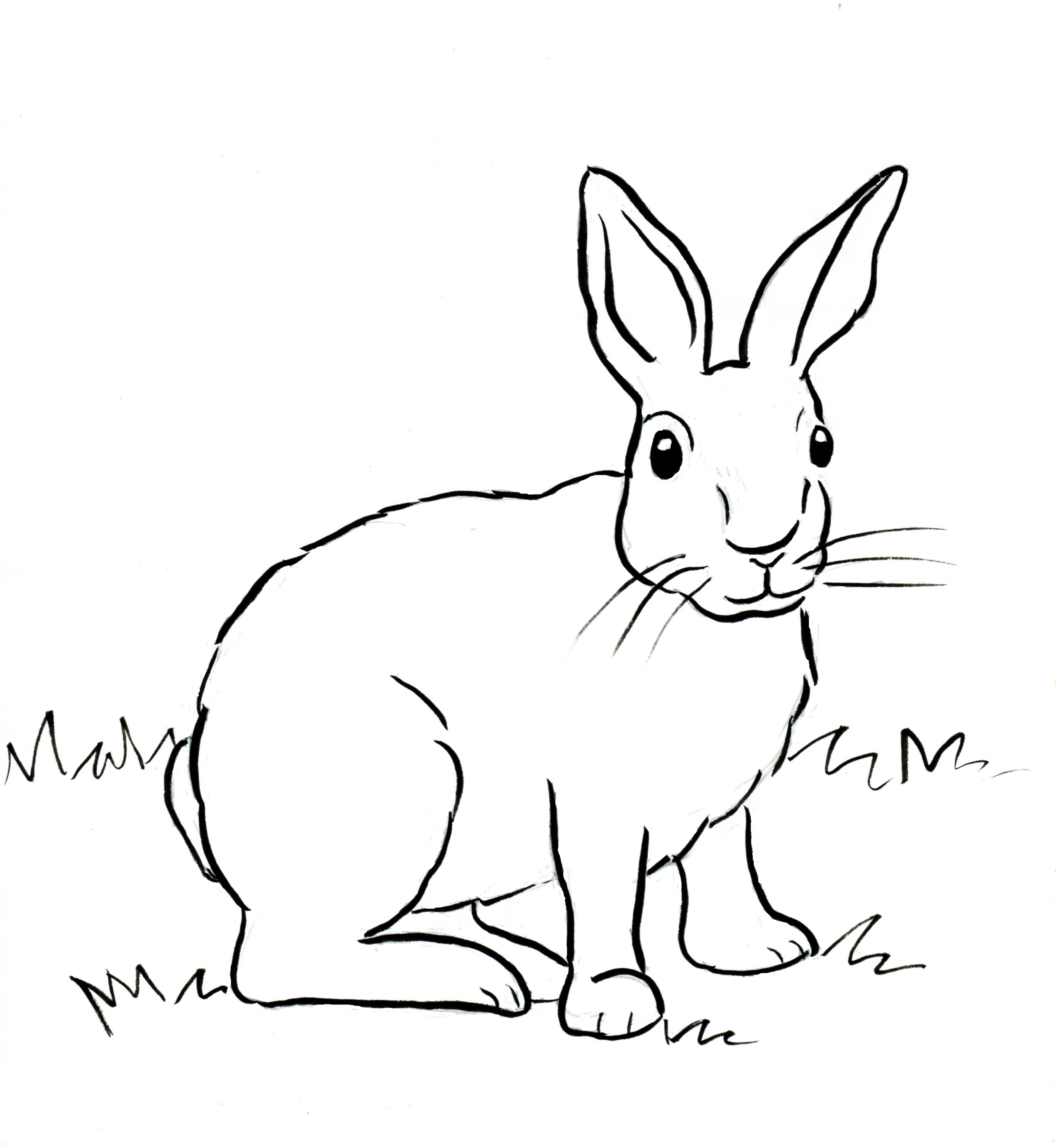 Drawn rabbit wild rabbit Rabbit Samantha Bell  Coloring