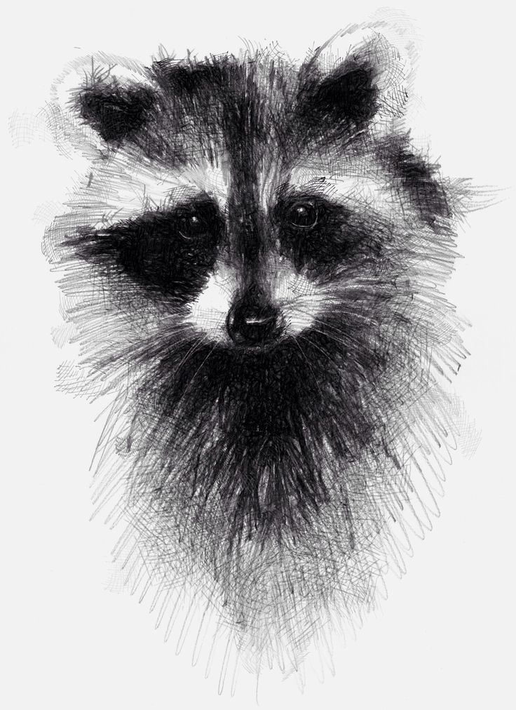 Drawn raccoon One drawings #drawing day a
