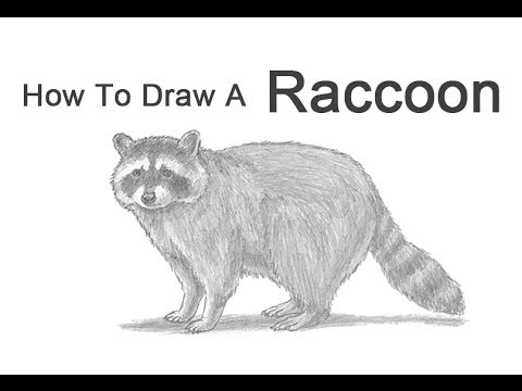 Drawn racoon Draw to YouTube  a