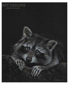 Drawn raccoon pencil Pencil Raccoons Raccoon Art