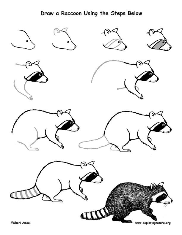 Drawn raccoon racoon 25+ Raccoon illustration Lesson Drawing