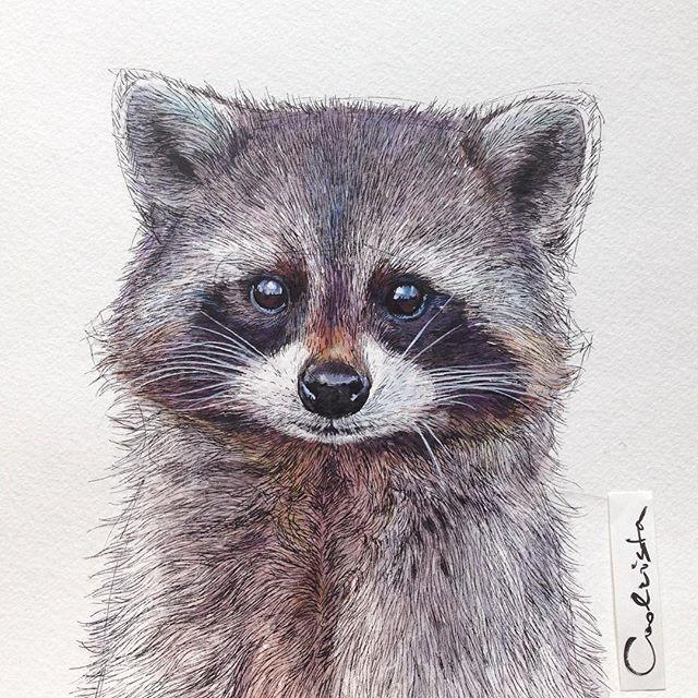 Drawn raccoon realistic Guess done Pinterest My #raccoon