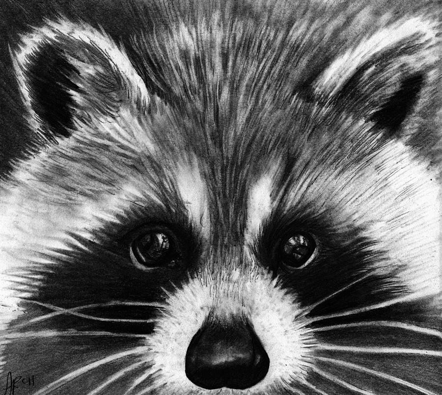Drawn raccoon realistic  Raccoon Drawing