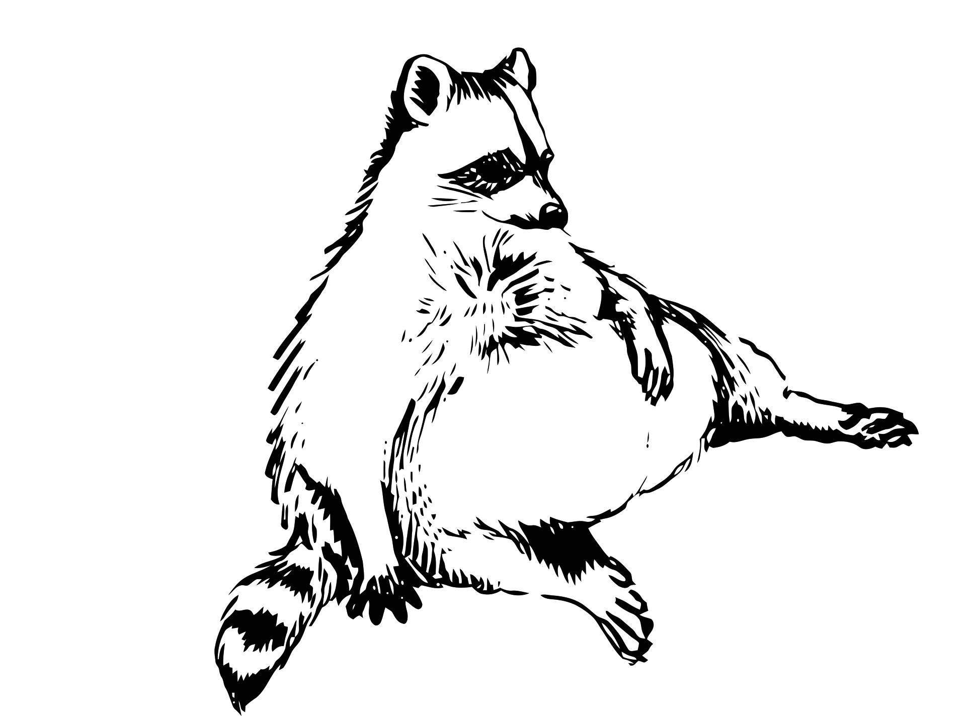 Drawn raccoon simple Vectorized fat your raccoon drew
