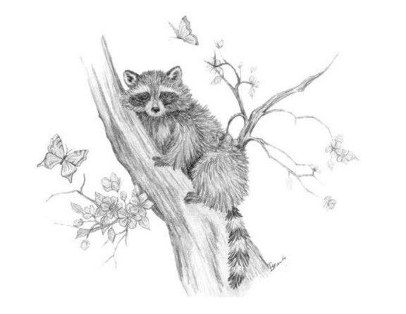 Drawn raccoon tree drawing  monique art dieren by
