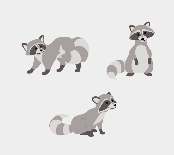Drawn racoon animated Pinterest best images Raccoon raccoon